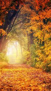 Autumn Trees Wallpaper - iPhone ...
