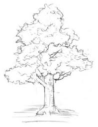 木と草の描き方
