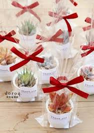 darling packaging delicate succulents in addition to a wedding anniversary the return birthday as a gift sent will be very special