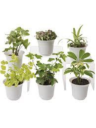 office plants for sale. Interesting Plants Best Low Light Plants For Your Indoor Decor Ideas  Terrarium Plant To Office Sale R