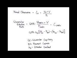 equation rapid review renal clearance