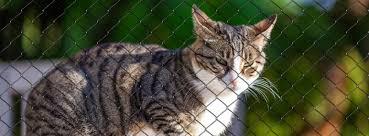 Katzensicherheiten Sicherheit Für Ihrer Katze In Berlin