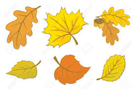 images of fall leaves cartoon