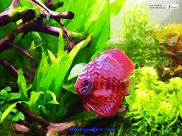 tropical aquarium wallpaper. Modren Aquarium Tropical Fish Aquarium Wallpaper  By Wonderful Beautiful Photograph  Images With Aquarium Wallpaper F