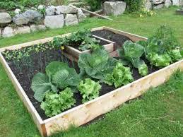 box garden. Box Garden