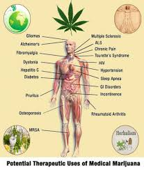 herbal benefits of medical marijuana visual ly herbal benefits of medical marijuana infographic