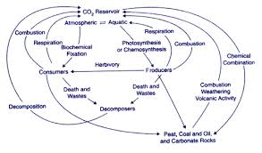 material cycles nutrient carbon nitrogen and sulfur cycle carbon cycle