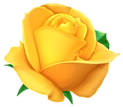 yellow rose hd clipart