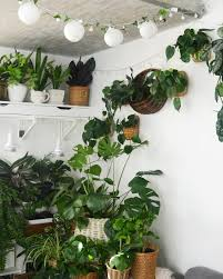 cool office plants. Clever Ways To Hang Your Plants Cool Office