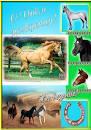 Открытки на день рождения с лошадьми