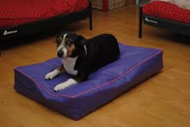 dog incontinence bed. Exellent Incontinence Image 0 To Dog Incontinence Bed