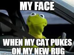 kermit my face when. Modren Kermit Sad Kermit  MY FACE WHEN CAT PUKES ON NEW RUG Image Tagged And Kermit My Face When