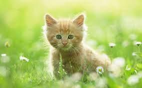 Cute Kitty Wallpapers on WallpaperSafari