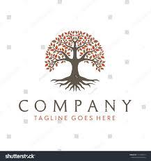 Banyan Tree Logo Design Tree Life Oak Banyan Leaf Root Stock Vector Royalty Free
