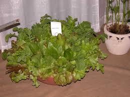 vegetables seeds