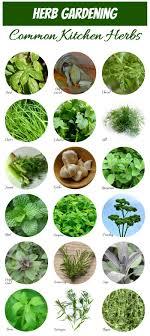 Printable Culinary Herb Chart Herb Identification Identifying Fresh Herbs