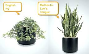 office cubicle plants. Cubicle Plant Large Size Of Good Office Desk Plants Get A For Your It Helps .