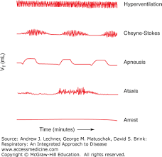 Types Of Breathing Patterns Central And Peripheral Neural Controls Of Respiration Respiratory