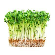 Rau mầm cải củ trắng,đỏ hộp 200Gr