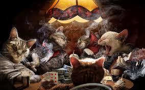 badass cat wallpaper. Simple Badass Some Badass Cats To Badass Cat Wallpaper K
