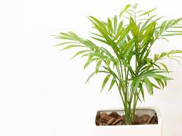 Pflanzen Fürs Badezimmer Unsere Top 10 Plantura
