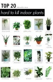 good indoor plants for low light best low light indoor plants great indoor plants com com