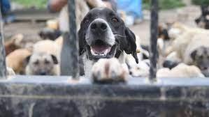 Son dakika: Hayvanları Koruma Yasası nedir, maddeleri neler? 2021 Hayvanları  Koruma Yasası kanunu çıktı mı, ne zaman yürürlüğe girecek? - Haberler