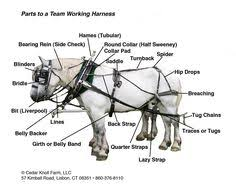 draft driving harness i want to learn about horses pinterest horse harness diagram at Horse Harness