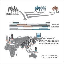 Interbreeding Surprise More Denisovans In Our Family Tree