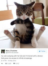 funny cat picture 07 05 2018