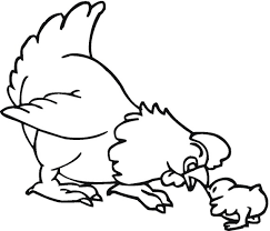 Free Chicken Pictures To Colour In Download Free Clip Art Free