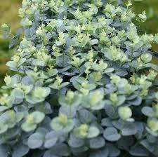 fake shrubs for outdoors artificial plants eucalyptus leaves bushes home garden decor light green outdoor planters