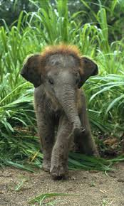 baby animals wallpapers. Exellent Animals Baby Animals  Download Baby Animal Wallpapers Free For Your Android Phone And Animals