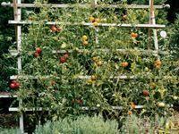 2471 Best DIY <b>Garden</b> Ideas images | <b>Garden</b>, Diy <b>garden</b>, <b>Outdoor</b> ...