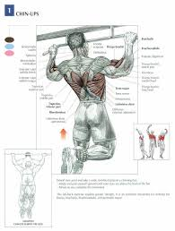 Image Result For Chart Of Muscle Movements And Exercises