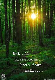 Best Nature Quotes Adorable 48 Best Inspired By Nature Images On Pinterest Inspirational