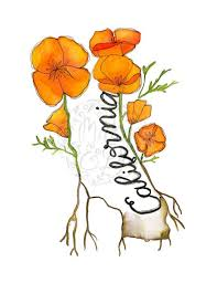 california poppies flowers art page 5