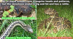 How Can You Tell What Kind Of Snake You Found And If It Is