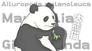 食べてゴロゴロが愛くるしいジャイアントパンダの魅力と会う事が出来る