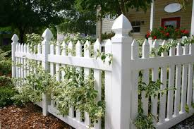a vinyl white picket fence in front of a small cottage with white rimmed leaves and wood bedding