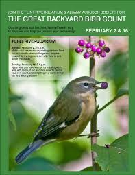 Birdwatching For Beginners  Bird Watching Tips For Backyard Backyard Bird Watch