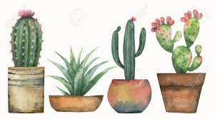 Image result for succulent clipart