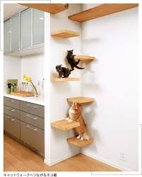 cat ladder cat shelves cat