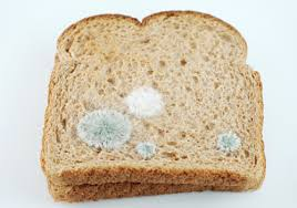 Bread Mold May Be Used For Better Rechargeable Battery Says Study