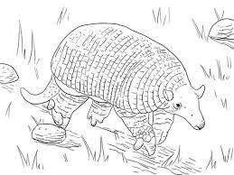 Small Picture Giant Armadillo coloring page Free Printable Coloring Pages