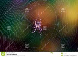 Fall Spider Web Stock Image Image Of Insect Fall Common