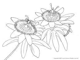 トケイソウの下絵夏の花のぬりえ