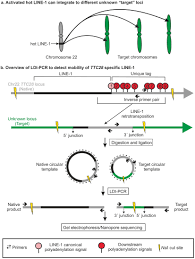 Detection Of Subclonal L1 Transductions In Colorectal Cancer