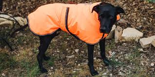The Best Winter Jackets And Raincoats For Dogs For 2019