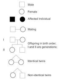 What Are Pedigree Charts Used For What Are Pedigree Chart Used For Illustrates The Common